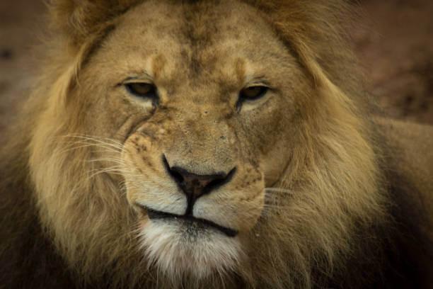 Um Guia Completo para você não se perder na declaração do IRPF 2020. Cuidado com o Leão!