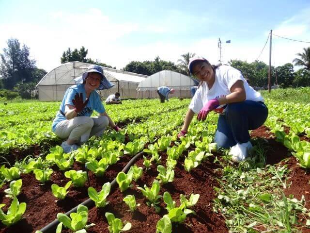 cooperativa agrícola