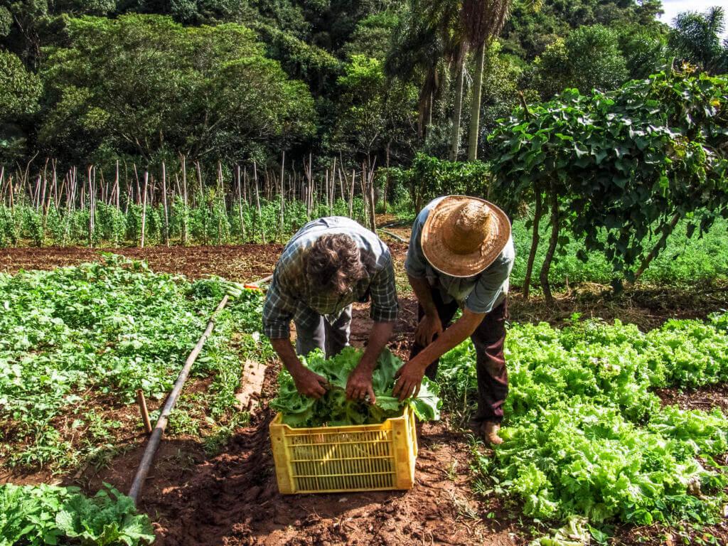 A propriedade rural necessita de licenças para funcionar como um negócio