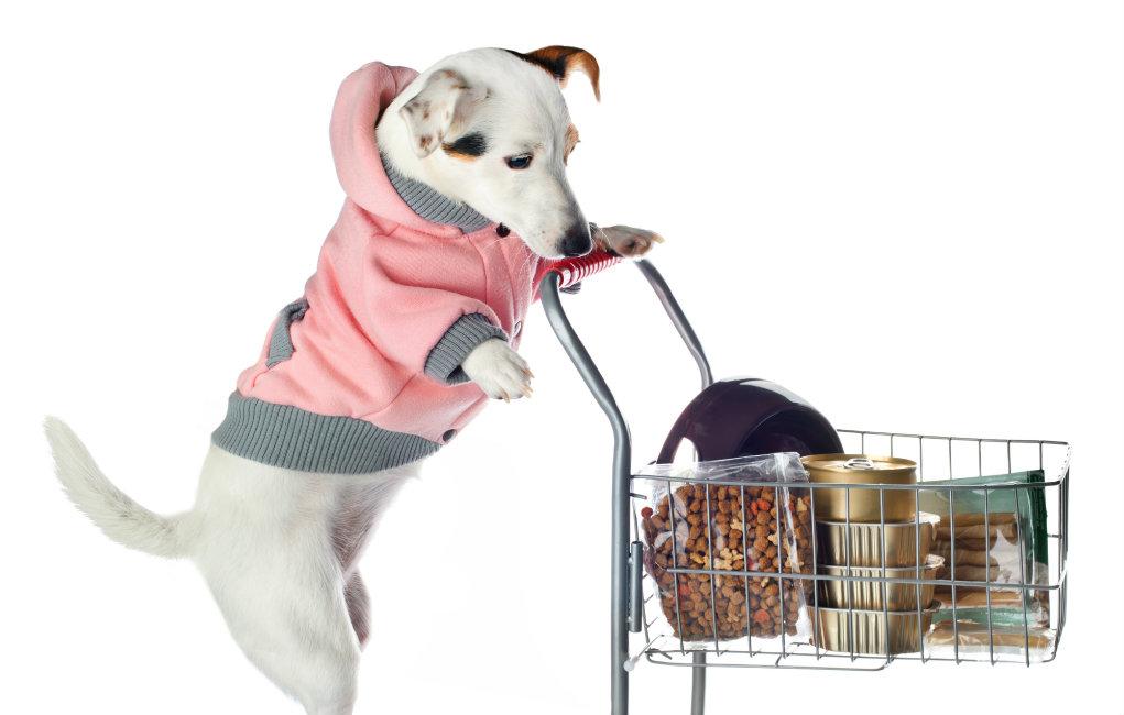 Empreender com o mundo de produtos e serviços voltados para o segmento pet