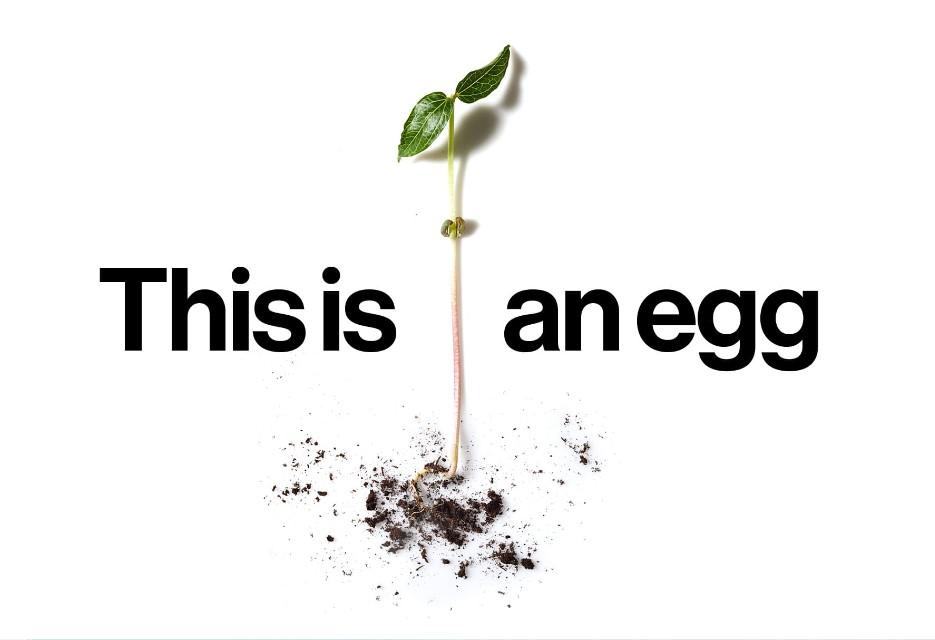 Just Egg: Startup aposta em diversidade de plantas para criar opções de alimentos veganos.